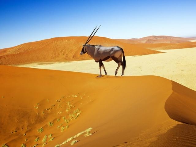 Diverse Namibia, Sossusvlei