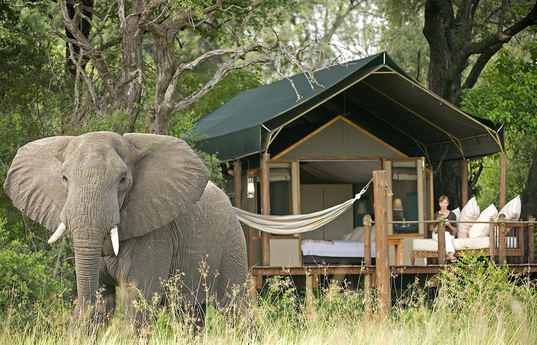 Elegant Botswana, Stanley's Camp