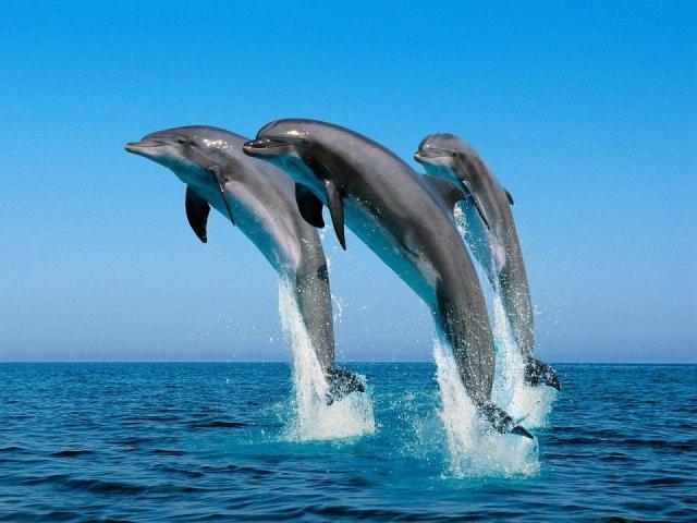Diverse Namibia, Swakopmund, Dolphin & Seal catamaran cruise