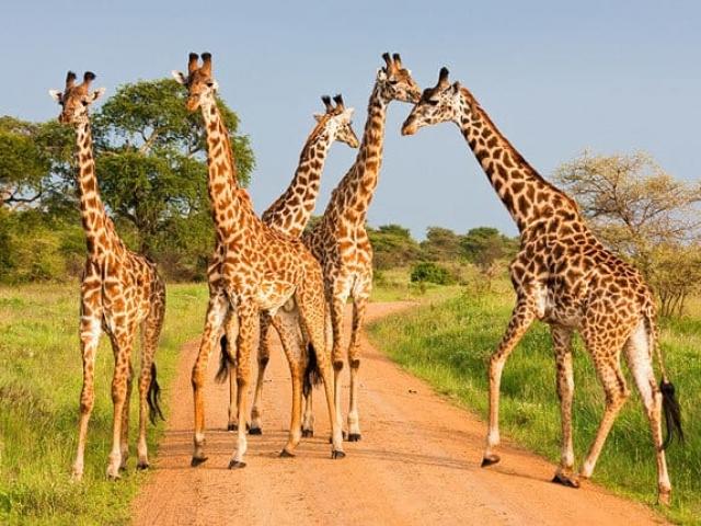 Tanzania Under Canvas, Tarangire National Park