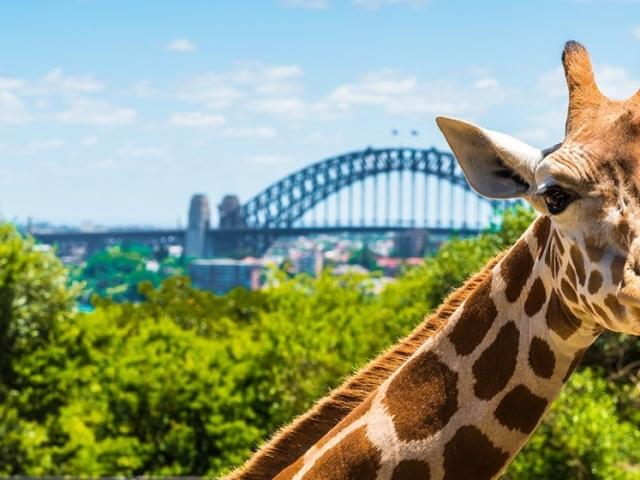 New South Wales, Sydney Taronga Zoo