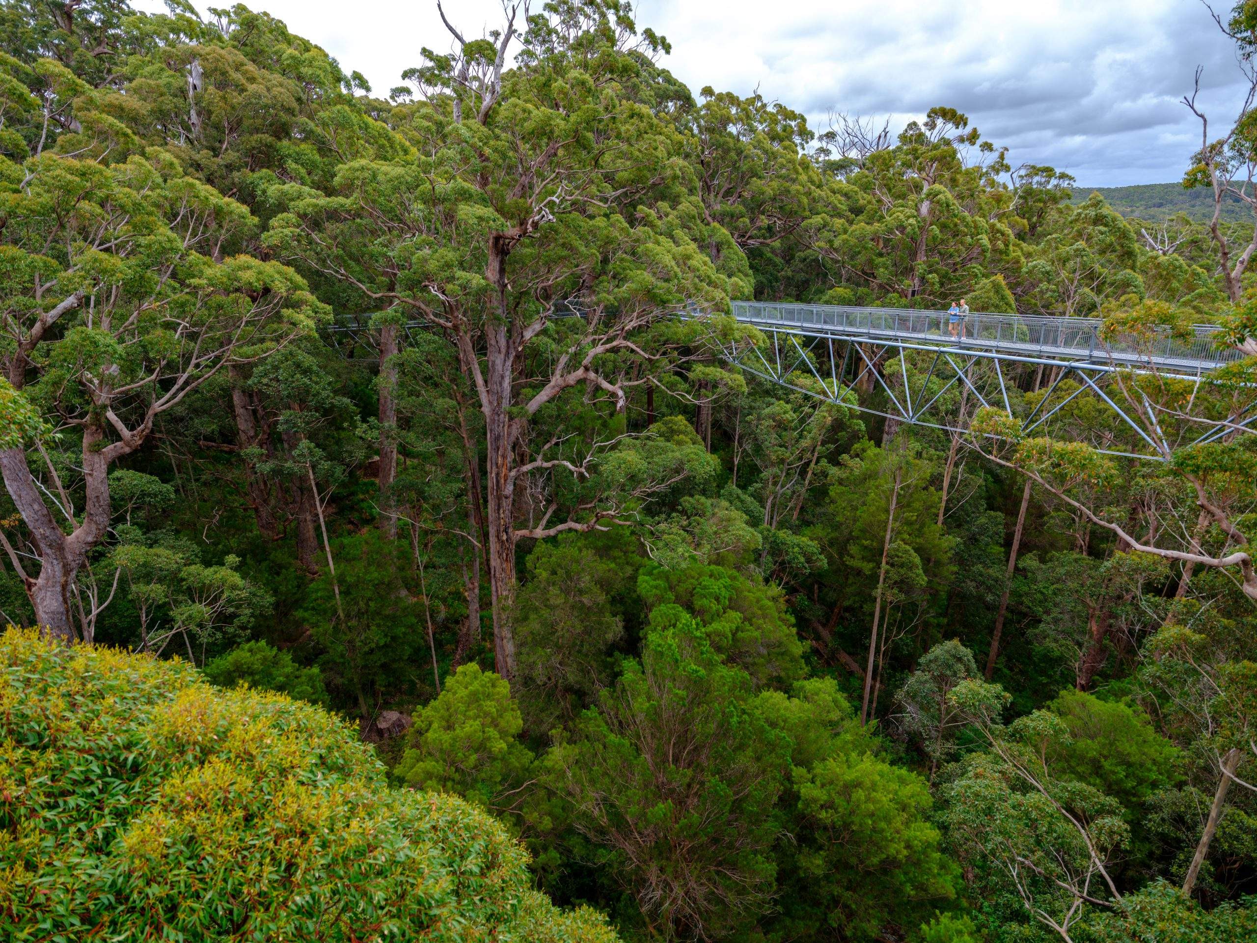 Albany & Valley of the Giants Tree Top Walk | Valley of the Giants, Tree Top Walk