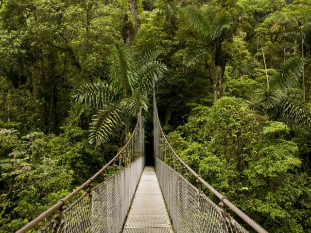 Costa Rica Adventure | Arenal Hanging Bridges