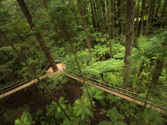 The Endless Shores | Redwoods Treewalk, Rotorua, New Zealand