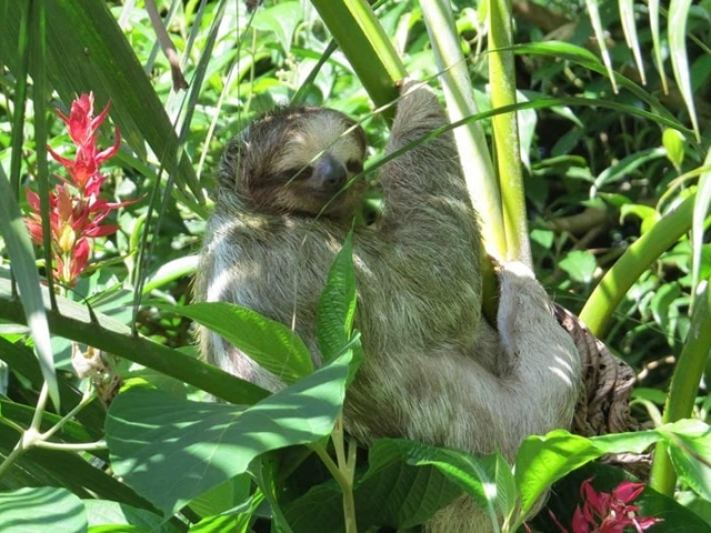 Costa Rica Eco Adenture | Sloth