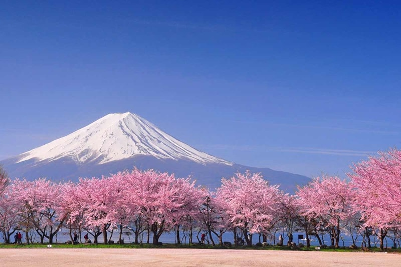 Treasures of Japan | Mt Fuji