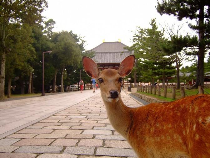 Japan World Heritage - Nara Park