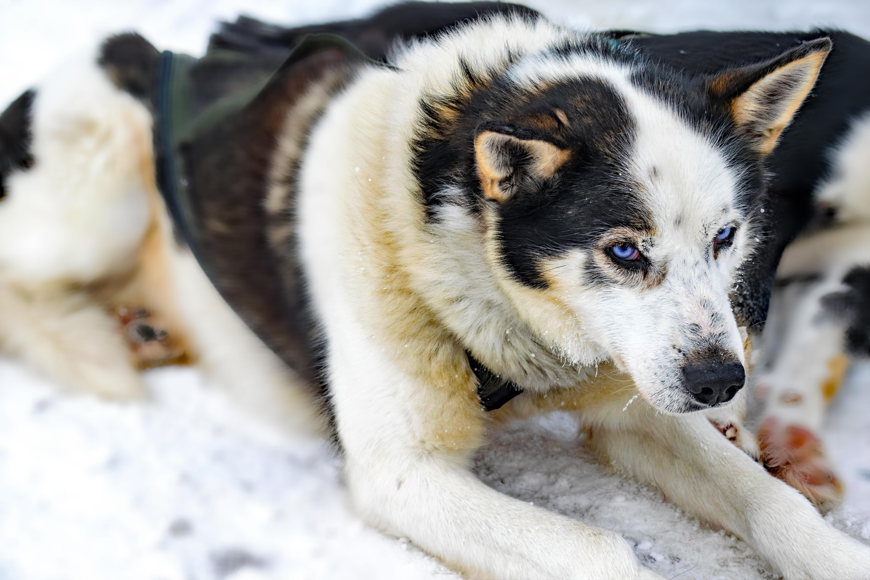 Grand Scandinavia - Husky, Lapland, Finland