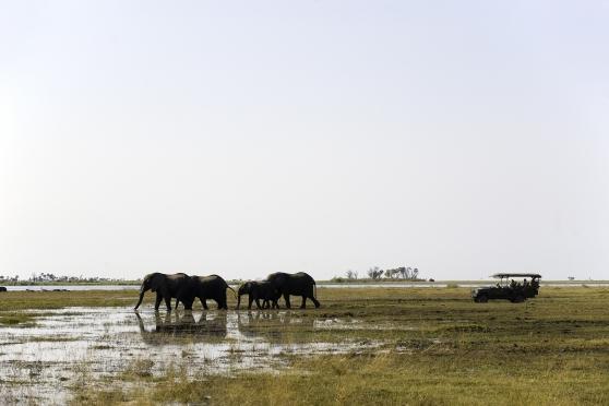 Zarafa Camp, Linyanti, Okavango, Botswana, Africa