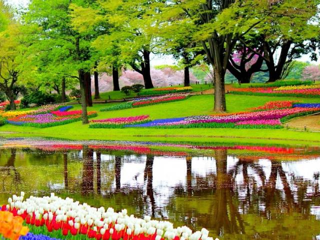 Best of the Netherlands - Keukenhof Flower Gardens, Keukenhof, Netherlands