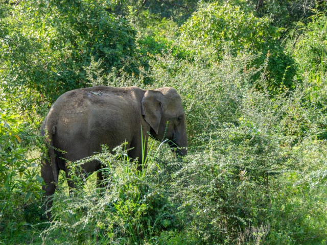 Wildlife Journey of Sri Lanka | Minneriya, Sri Lanka