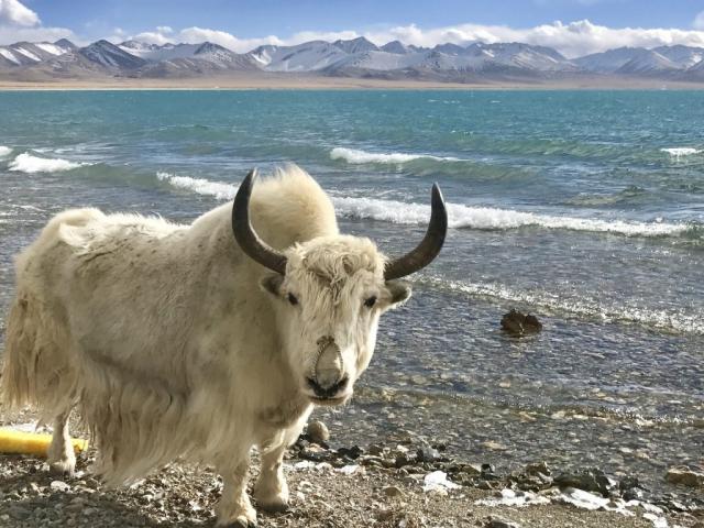 Central Tibet & Namtso Tour - Namtso Lake, Tibet