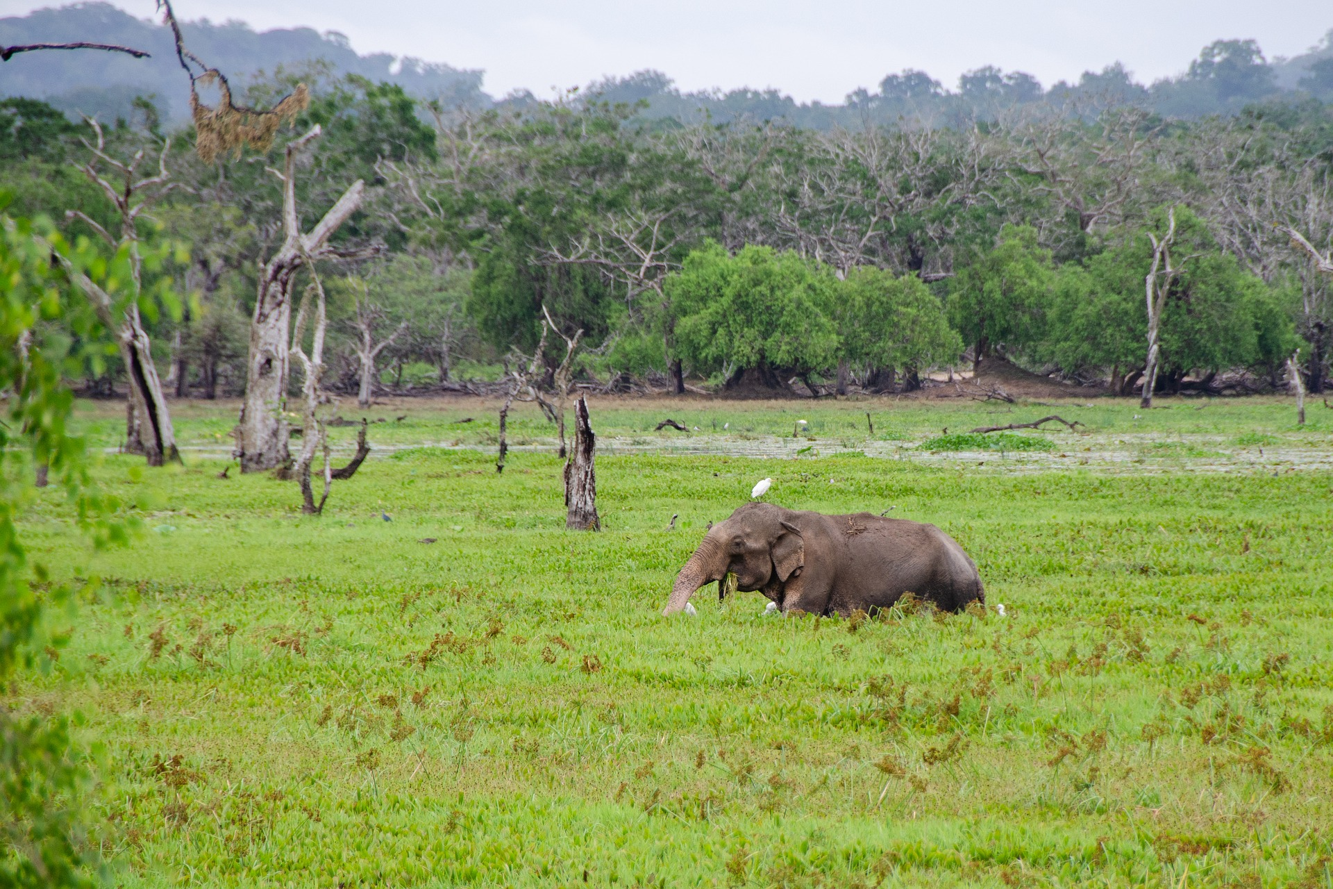 Spirit of Sri Lanka - Yala National Park, Sri Lanka