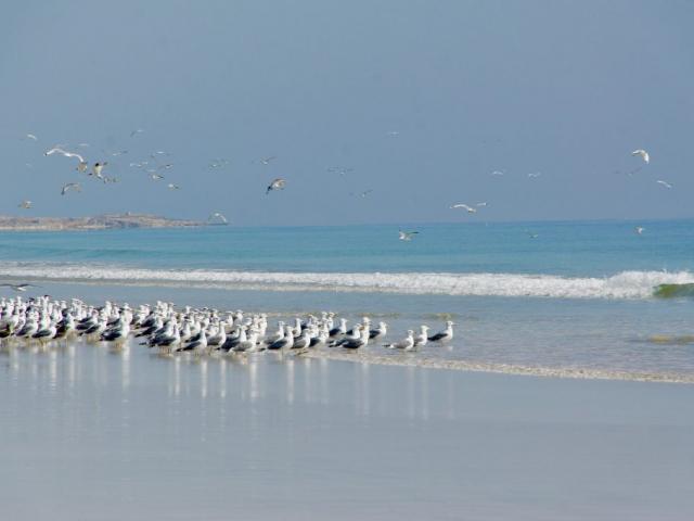 Experience Salalah - Mughsail Beach, Oman