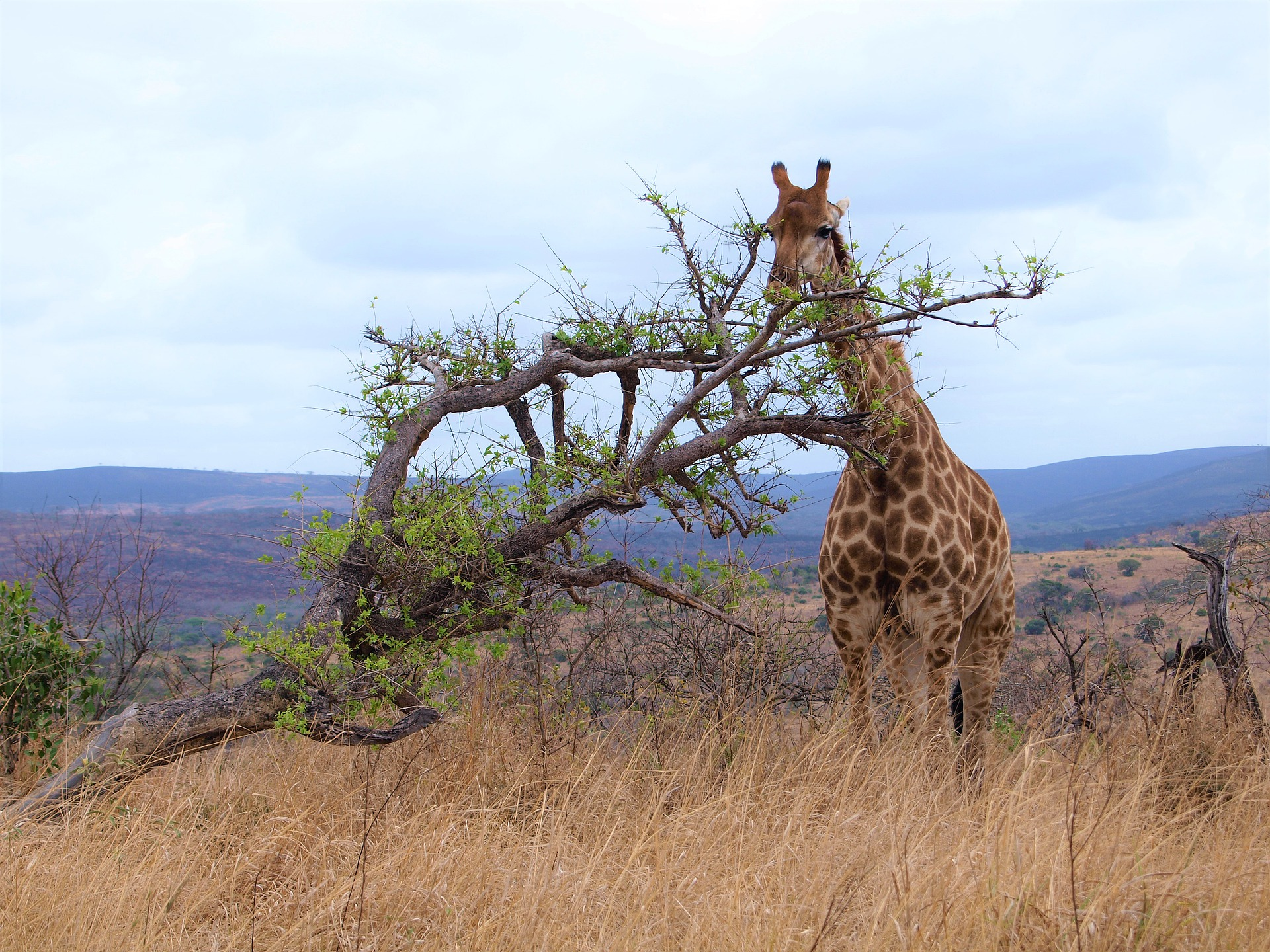 Essence of South Africa | Kruger National Park, South Africa
