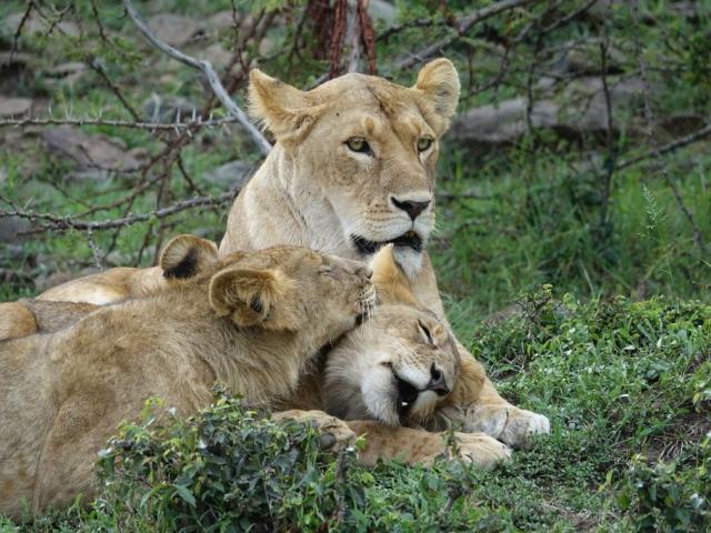 Kenya & Tanzania Adventure | Masai Mara, Nairobi