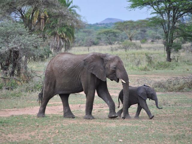 Kenya & Tanzania Adventure | Serengeti National Park, Tanzania