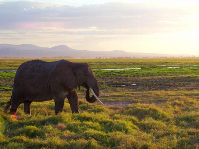 African Odyssey | Amboseli National Park, Kenya