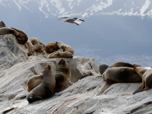 Patagonia: Journey to the End of the world | Beagle Channel, Ushuaia, Argentina