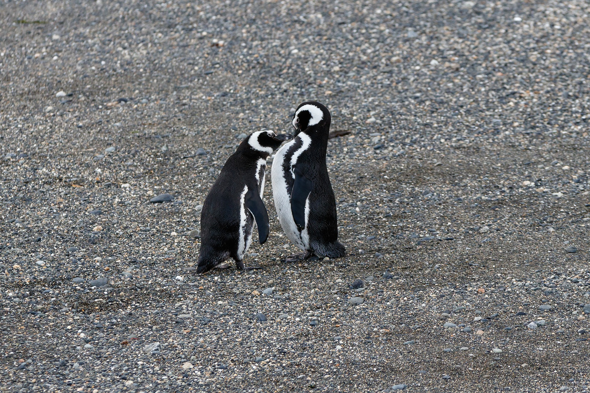 Wonders of Patagonia | Magellanic Penguins, Beagle Channel, Ushuaia, Argentina