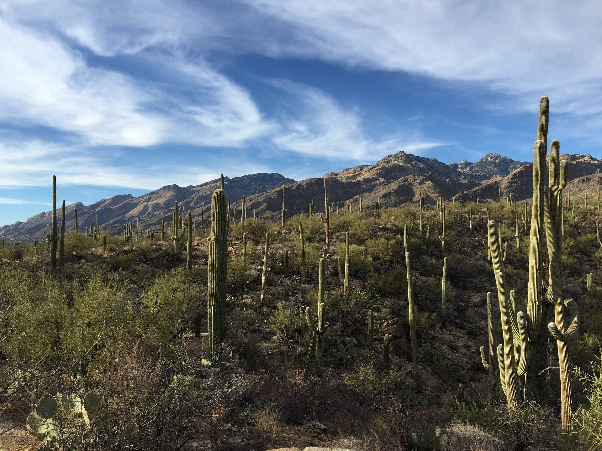 America's Great Desert National Parks | Saguaro National Park, Arizona, USA