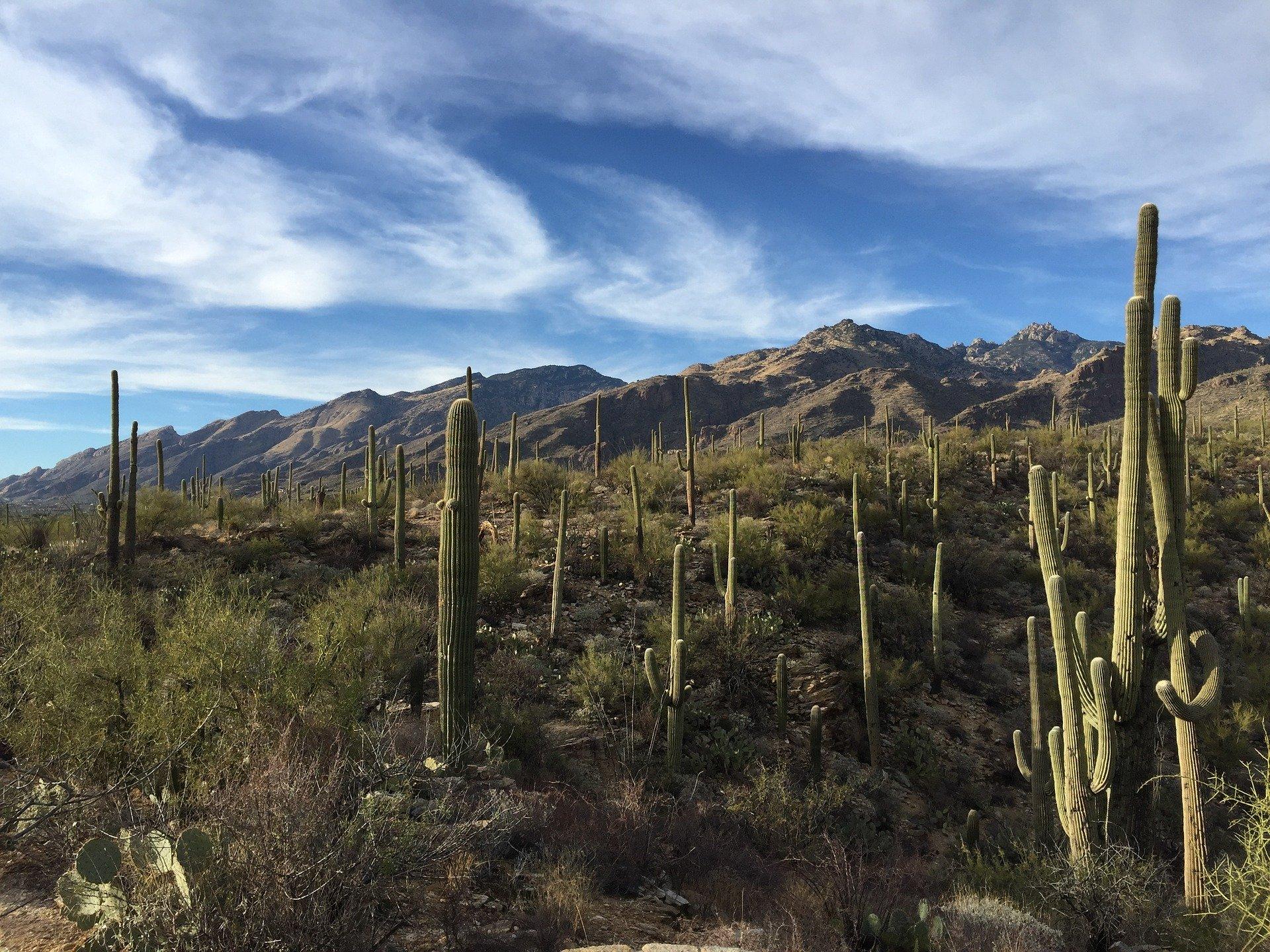 America's Great Desert National Parks | Saguaro National Park, Arizona, USA