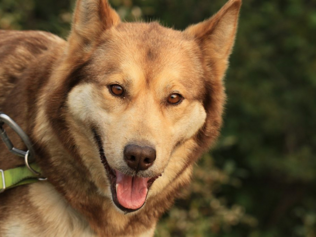 Alaska & The Yukon Tour | Tok, Dog Sled Capital of the World, Alaska