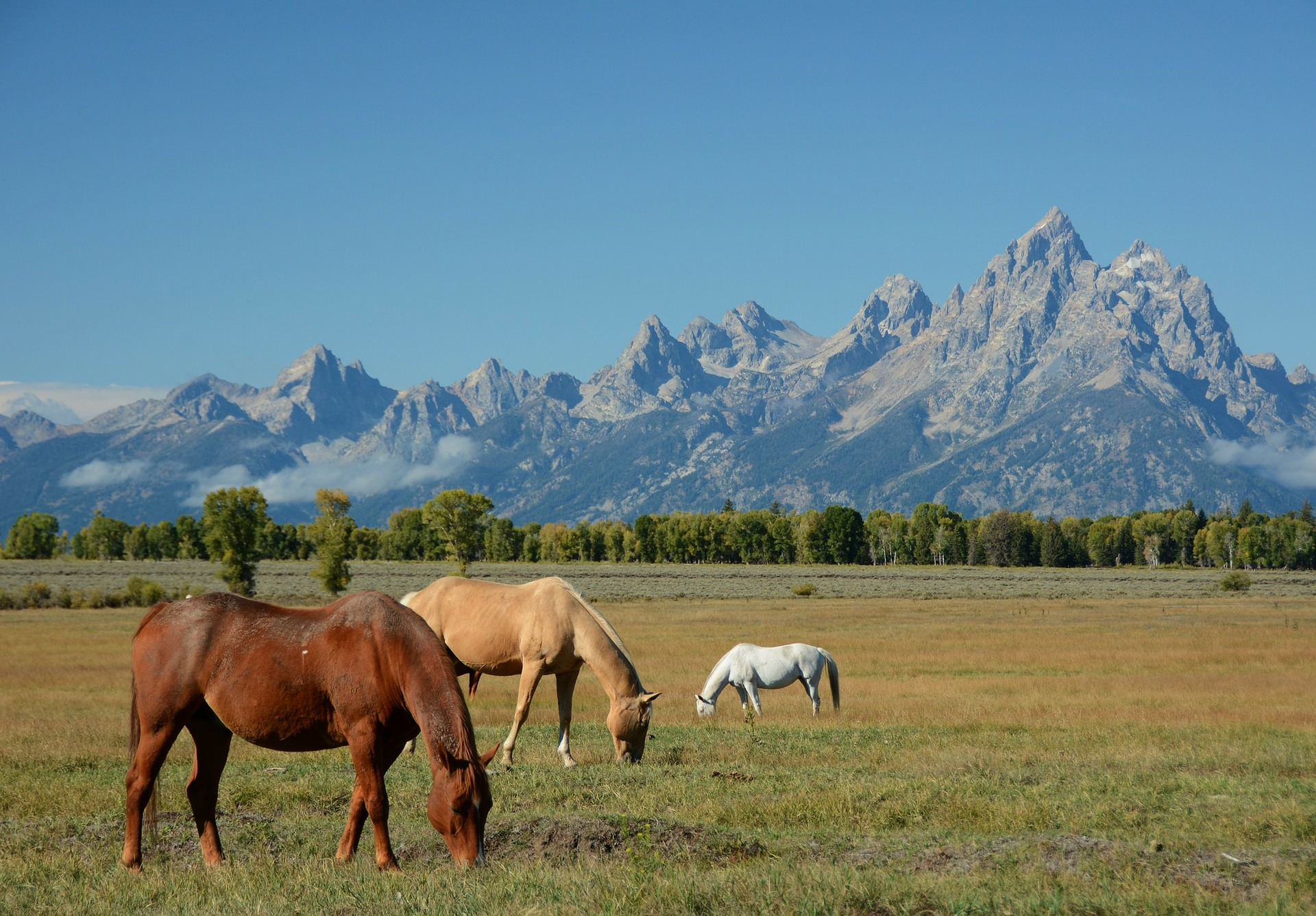 Western Frontiers | Grand Teton National Park, Wyoming, USA