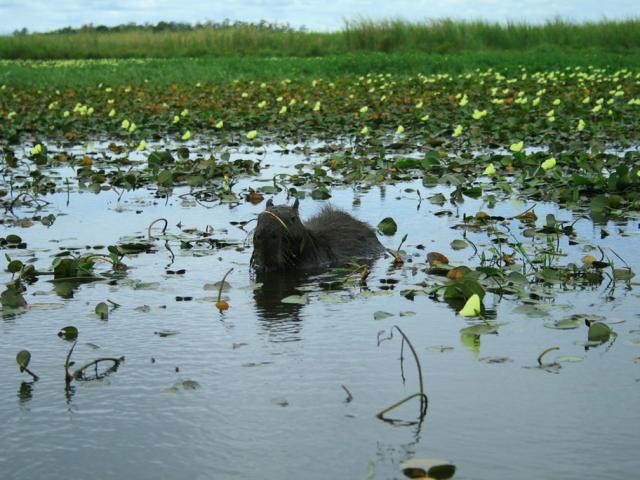 Experience Ibera Wetlands   Ibera Wetlands, Argentina