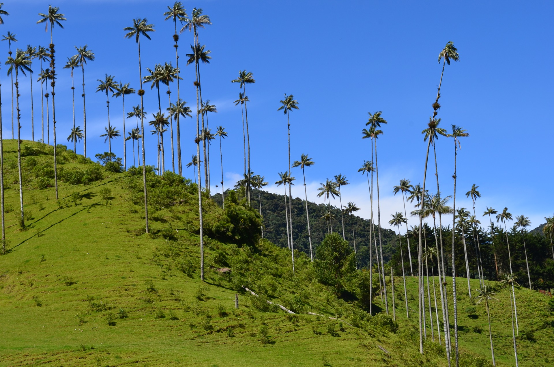 Coffee Aromas & Colonial Charms | Cocora Valley, Colombia