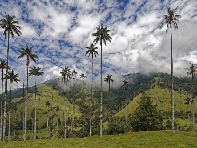 Aromas of the Coffee Region (Armenia) | Cocora Valley, Colombia